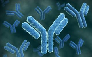 В анализе на токсоплазмоз lgg положительный — норма или патология?