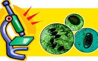 Что показывает общий анализ кала: норма показателей и возможные заболевания