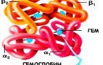 Норма гемоглобина в крови у человека и причины отклонения от нормы