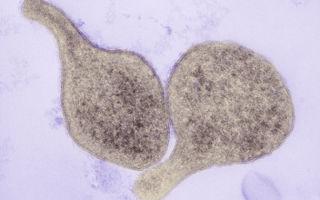 Что такое микоплазма гениталиум? — пути заражения, симптомы, лечение и возможные последствия