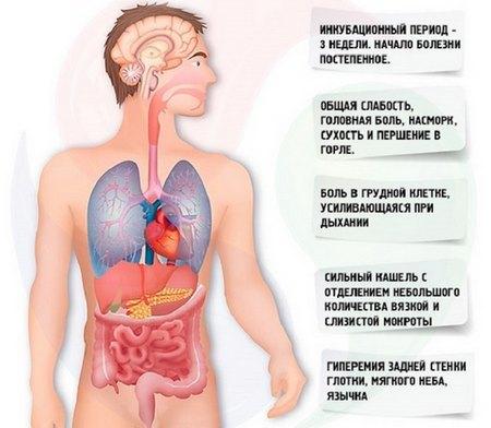 Пневмония верхней доли правого легкого: признаки, лечение и питание при патологии