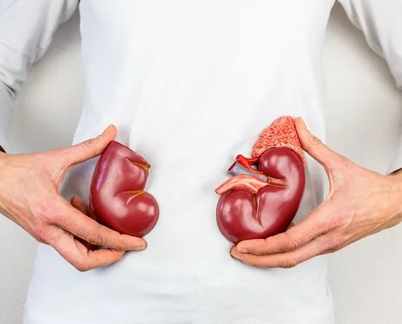 Что это такое диффузные изменения паренхимы почек: причины, диагностика, терапия
