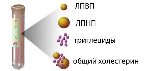 Биохимия - липиды: значение, классификация, диагностика и их норма в крови
