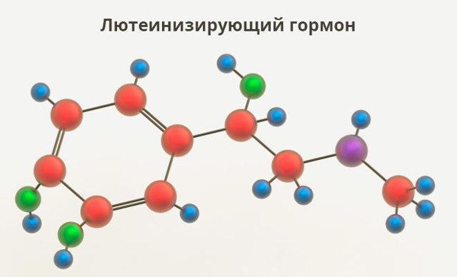 Лютеинизирующий гормон у женщин: функции, норма, причины повышения и способы нормализации