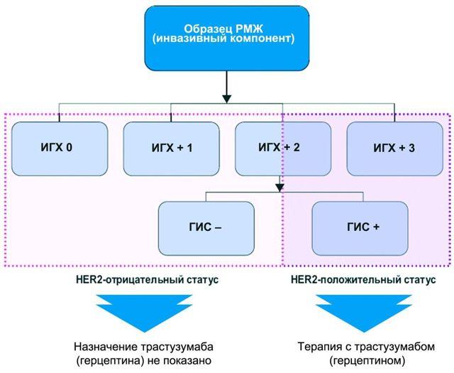 her2-положительный рак молочной железы: методы определения her2 статуса, их точность и другая полезная информация