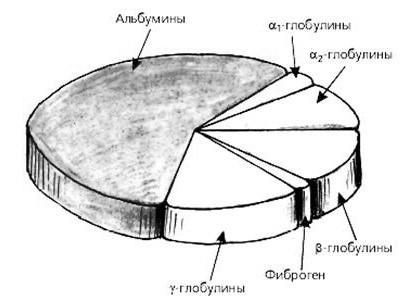 Альбумин - характеристика белка, норма показателя и возможные заболевания