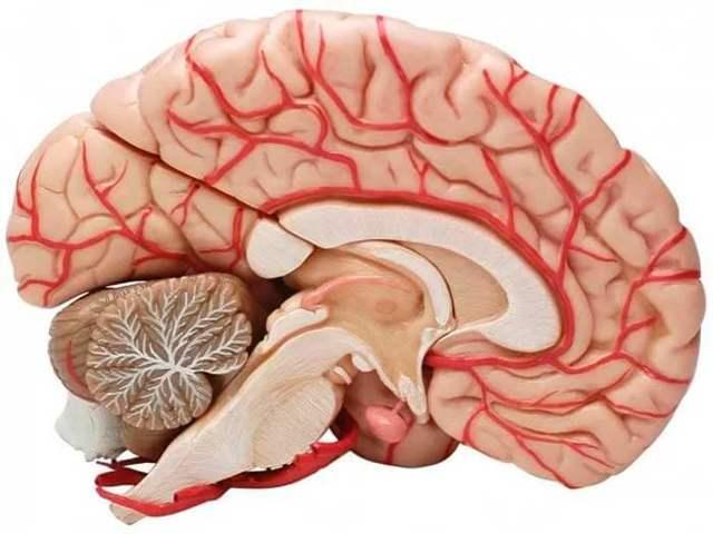 Дисгенезия мозолистого тела: особенности заболевания, способы лечения и прогноз