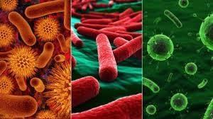 Вирусная или бактериальная инфекция по анализу крови: расшифровка результатов
