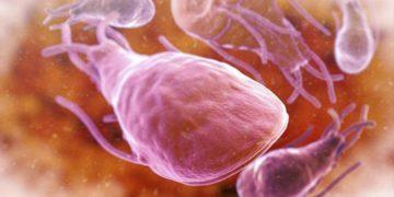 Лямблиоз: жизненный цикл лямблии и методы лечения паразитарного заболевания