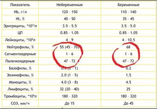 Анализ крови на neu - значение показателя и расшифровка
