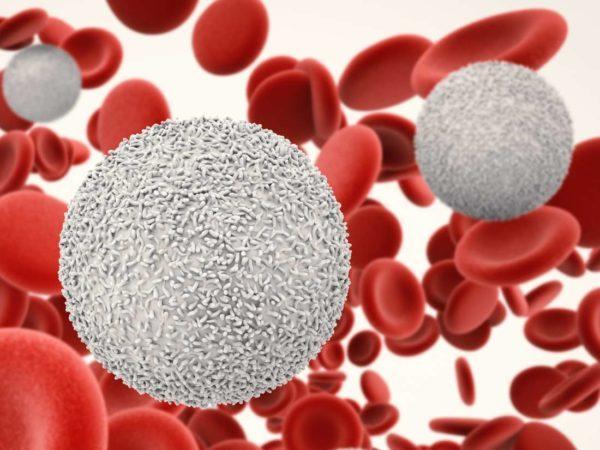 Как быстро и эффективно повысить уровень лейкоцитов в крови