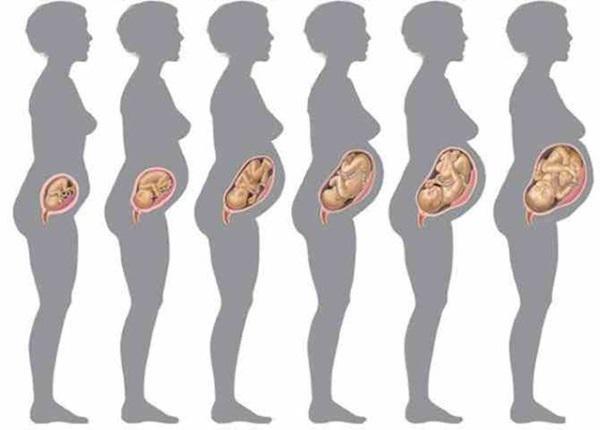 Размер и вес плода по неделям беременности: норма и патология