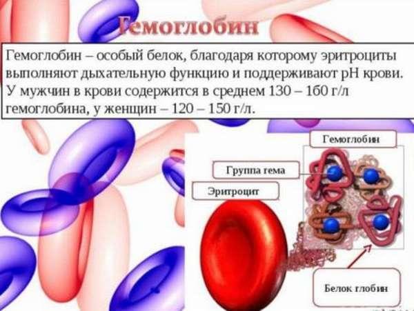 Низкий гемоглобин у женщин: причины, признаки и способы нормализации
