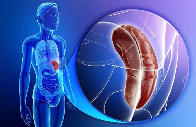 Гемангиома селезенки: причины, диагностика и лечение опухоли