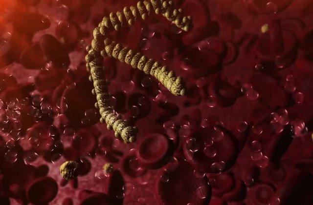 Норма триглицеридов в крови и причины отклонения показателя