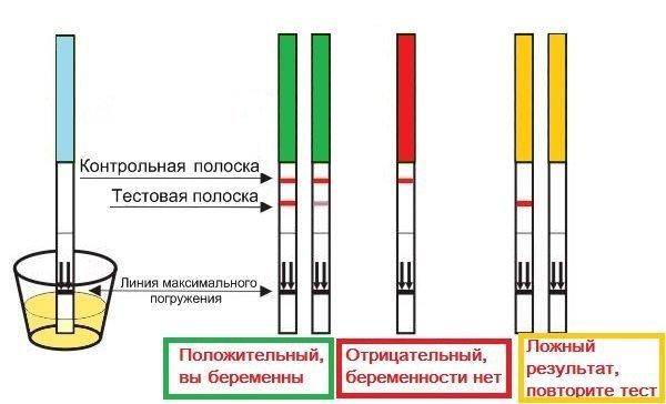 Анализ крови на определение беременности: описание, подготовка, расшифровка и преимущества