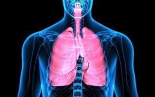 Компьютерная томография легких: подготовка, процедура, цена и возможные результаты