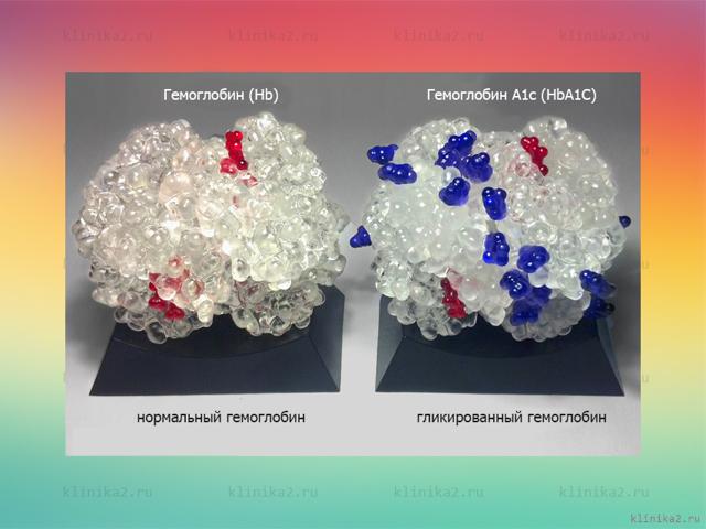 Анализ на гликированный гемоглобин (hba1c): применение, как правильно подготовиться, результаты