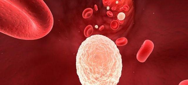 Понижены тромбоциты и лейкоциты: причины, признаки и опасность отклонения показателей