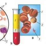Какой анализ крови показывает беременность и как правильно к нему подготовиться?