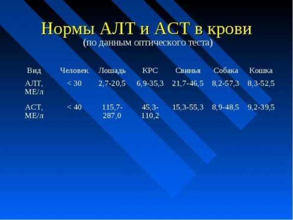 Анализ крови АСТ: причины повышения и способы понижения показателя