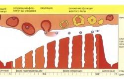 Неоднородность эндометрия — норма или патология?