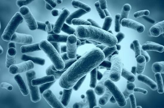 Бактерии в анализе мочи: основные симптомы и методы лечения бактериурии