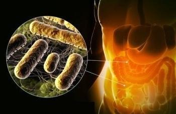 Сальмонеллез: симптомы, формы и методика лечение недуга