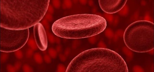 Форменные элементы крови: эритроциты, лейкоциты и тромбоциты