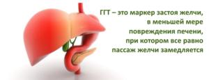 Что это такое - ГГТ: описание фермента, назначение на анализ и расшифровка результатов исследования
