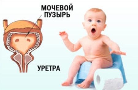 Повышенные лейкоциты у новорожденного: причины повышения, лечение лейкоцитоза, лейкоциты в моче