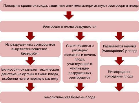 Какая группа подходит к 1 отрицательной: совместимость и резус-конфликт