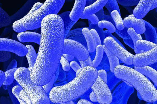 Токсоплазмоз: описание и норма антител при заболевании
