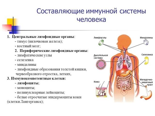 Расшифровка иммунограммы: основные показатели и их норма