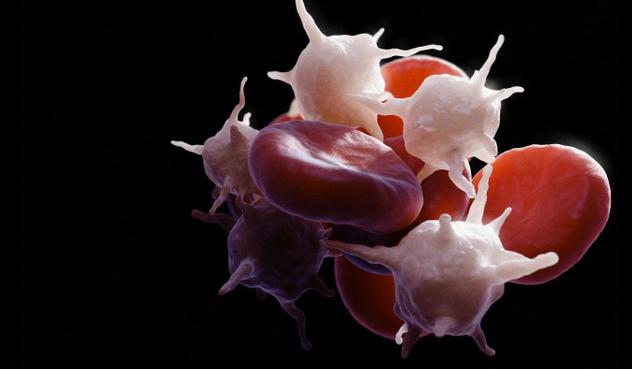Количество тромбоцитов в крови: норма и причины отклонения показателя