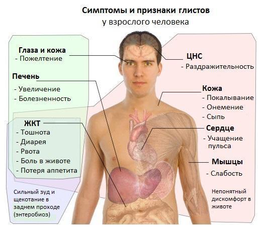 Как сдать анализ крови и кала на гельминты: подготовка и процедура