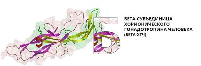 Анализ на бета-ХГЧ: норма гормона в крови и причины отклонения