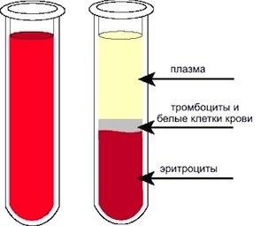 Состав плазмы крови человека: белковые и небелковые органические, минеральные и неорганические вещества