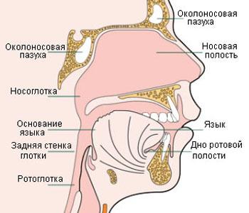 Что такое опухоль Беркитта? Признаки, причины, лечение и дальнейший прогноз