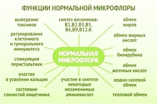 Нормальная микрофлора человека: виды, функция, диагностика отклонений