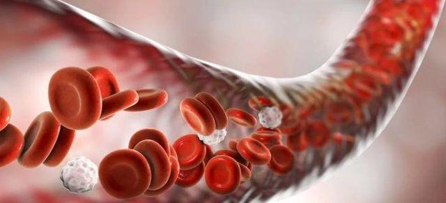Строение и функции эритроцитов, диагностика и расшифровка