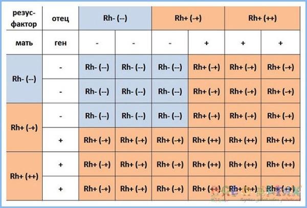 Группа крови родителей и детей: таблица и причины резус-конфликта