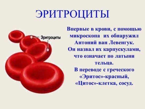 Что такое эритроциты в анализе крови, их обозначение и норма