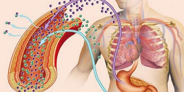 Паратиреоидный гормон (Паратгормон, Паратирин, ПТГ, parathyroid hormone, pth)