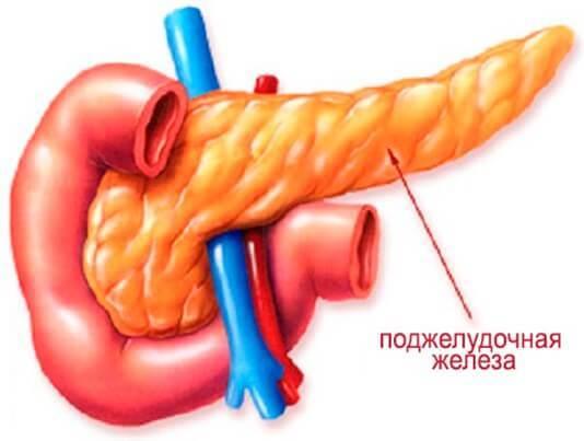 Клинические и УЗИ признаки диффузных изменений поджелудочной железы