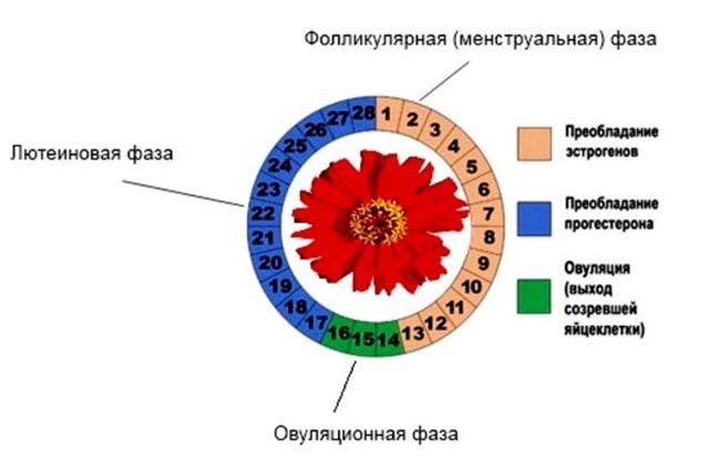 Что такое референсные значения в анализах крови и что может на них повлиять