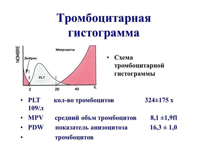 Причины повышения среднего объема тромбоцитов, признаки и методы нормализации показателя