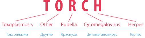 Анализы на torch-инфекции: значение, диагностика и возможные результаты