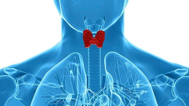 Как сдать анализ крови на гормоны щитовидной железы и какая должна быть их норма?
