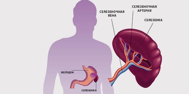 УЗИ брюшной полости: расшифровка и норма показателей обследования